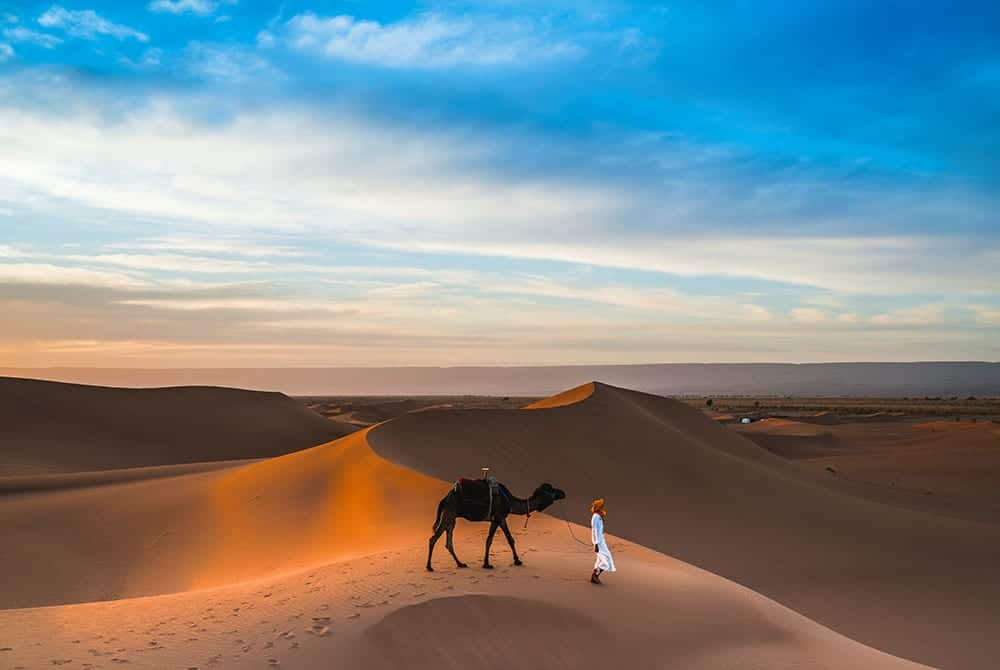 Camel on sand dune in Dubai
