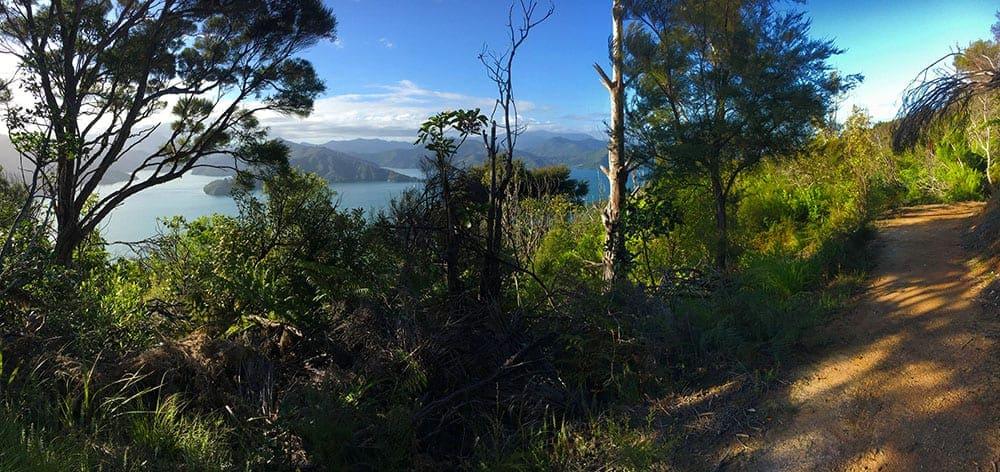 Queen Charlotte Sound New Zealand