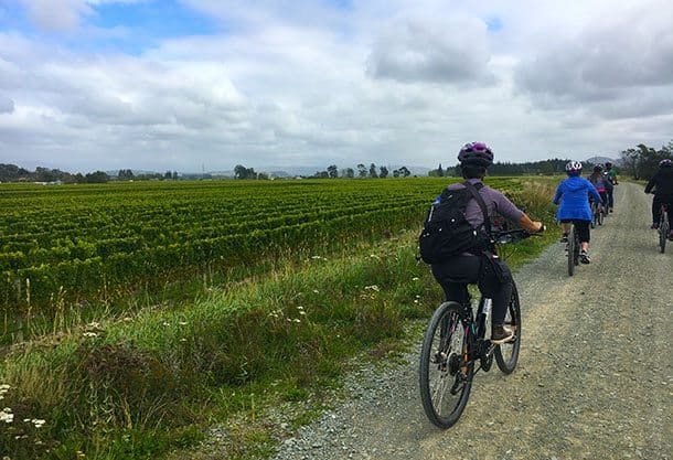 Winery cycle tour Marlborough