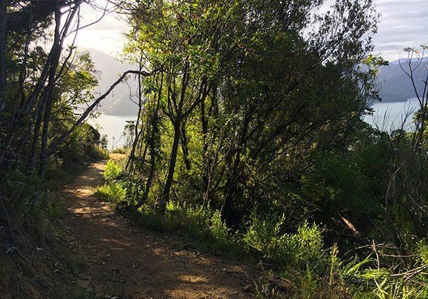 Cycle track Marlborough