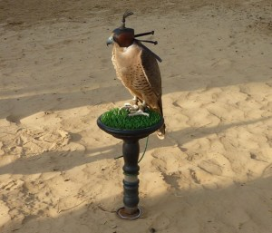 Gizmo the falcon