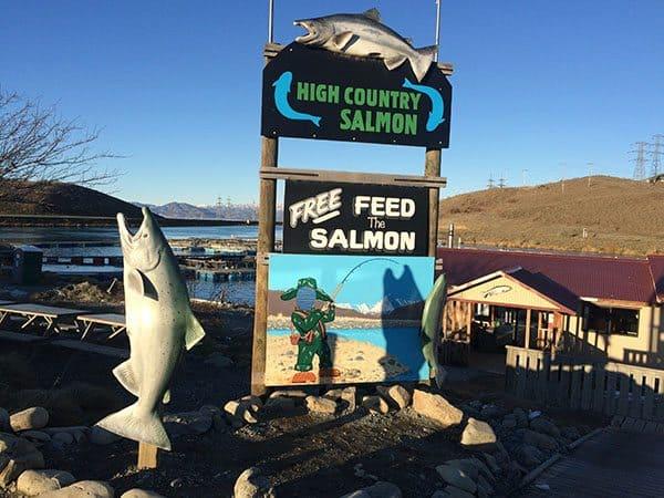 High Country Salmon Twizel