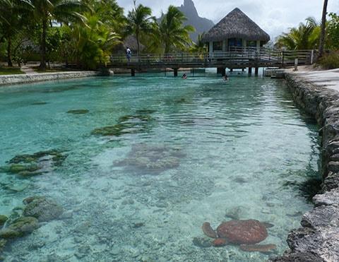 Le Meridien turtle sanctuary