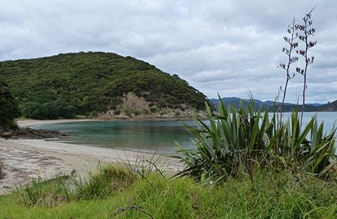 Moturua beach