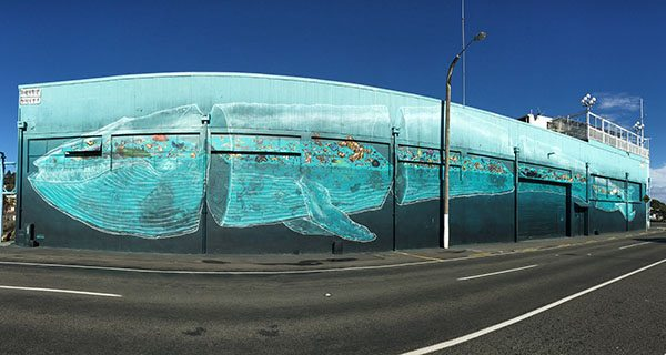 Napier mural art