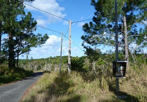 rural Pay phone Isle of Pines