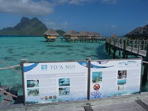 Pearl resort reef nursery