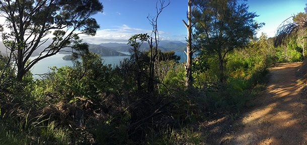 Link track Picton
