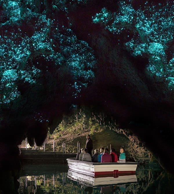 Waitomo glow worms