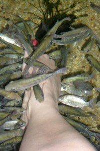 Freaky fish foot spa!
