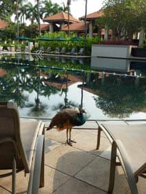 Feathered pool boys